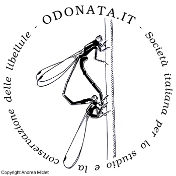 logo-5_pic