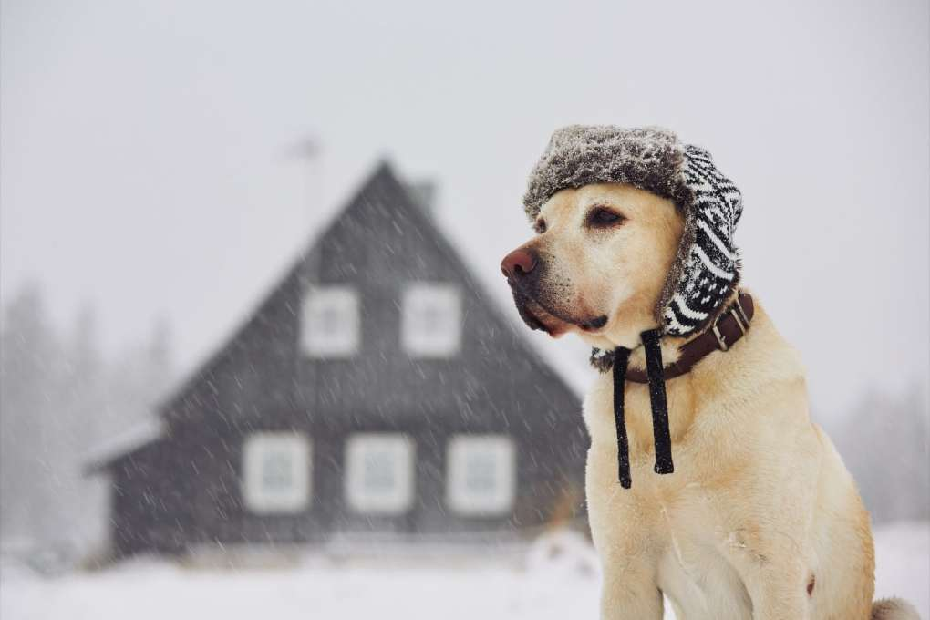 Dog with hat in cold