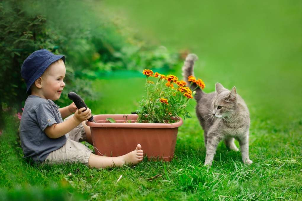 Gardens for cats