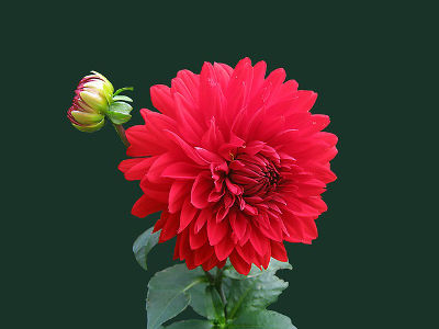 Co je Bachova květinová terapie?