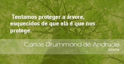 Tentamos proteger a árvore, esquecidos de que ela é que nos protege. - Carlos Drummond de Andrade, poeta