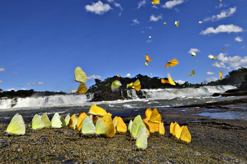 Parque Nacional do Juruena Adriano Gambarini 2