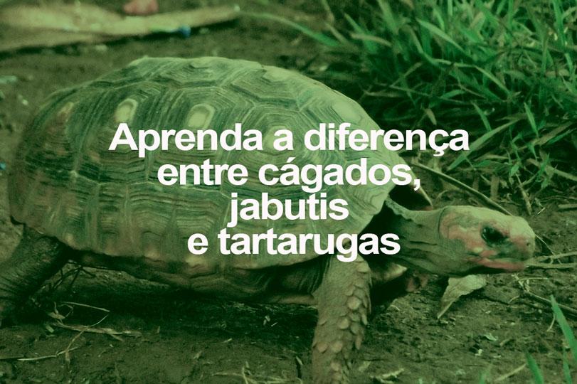 aprenda-diferenca