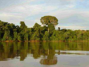 Monitoramento do país incluirá a Amazonia e outros ecossistemas, como as altas montanhas e a costa Atlântica. (foto SINCHI)