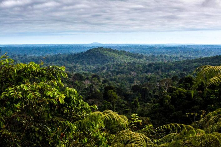 """""""As áreas protegidas são a melhor ferramenta de conservação que temos em nossa caixa de ferramentas"""", diz o pesquisador Mark Mulligan. A Floresta Nacional de Carajás, Pará, Brasil. Foto de Flavio Forner/XIBÉ"""