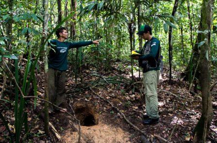 Durante atividade de campo, a equipe monitora sítios utilizados pelas ariranhas, como essa loca abandonada. Foto: Amanda Lelis.