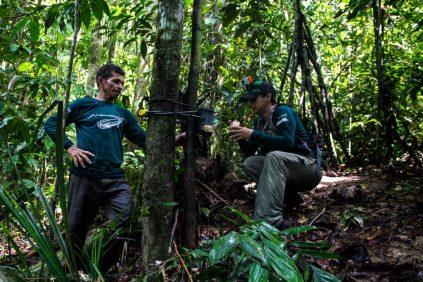 Armadilhas fotográficas são utilizadas para colaborar com o registro de ariranhas. Foto: Amanda Lelis.