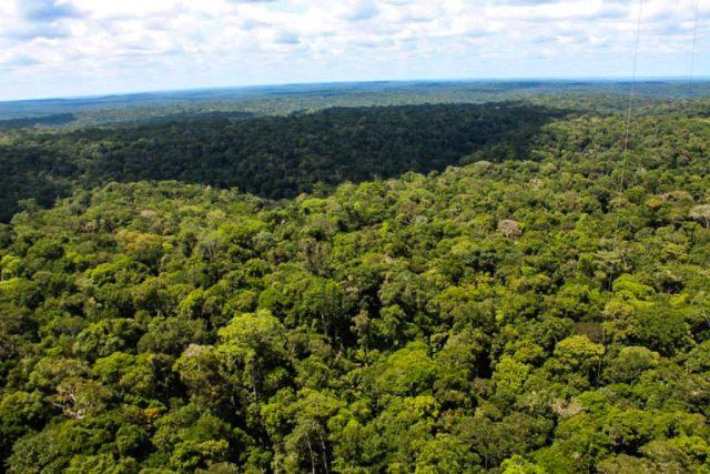 Vista da floresta amazônica a 115 metros de altura. Torre ATTO terá 325 metros no fim da construção. Foto: INPA