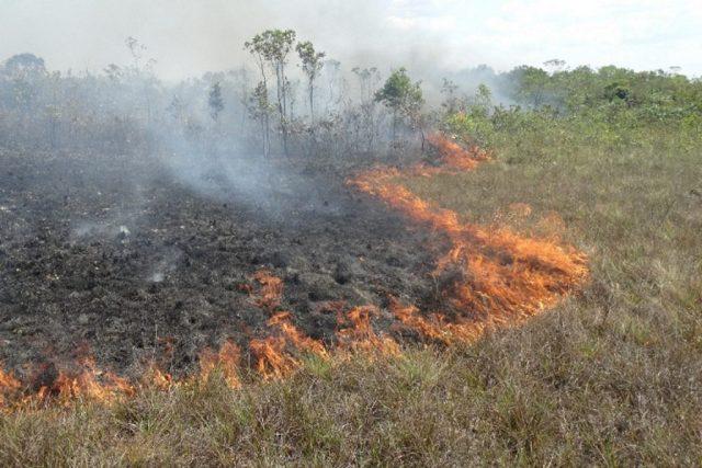 Um ano quente no Amazonas. Foto: Prevfogo/Ibama.