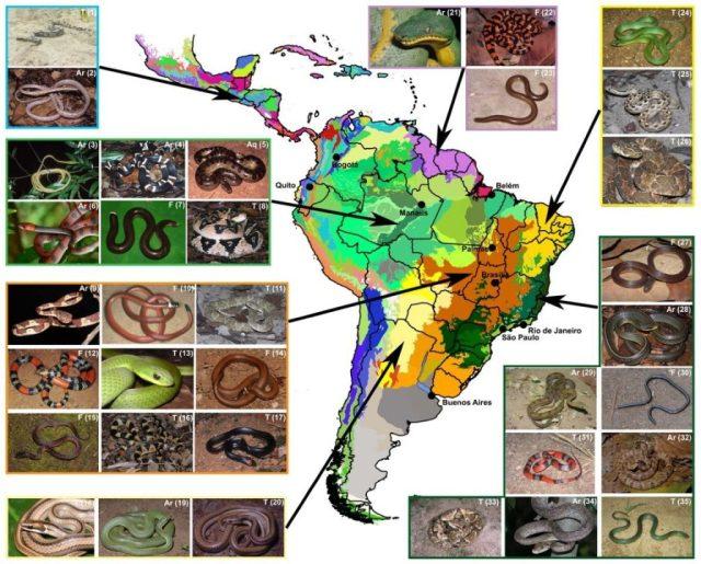 Mapa de distribuição das serpentes. Fonte: Guedes et al. 2017.