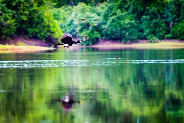 O Pantanal abriga pelo menos 4.700 espécies conhecidas, entre animais e plantas. Foto: Diego Lizcano/Flickr.