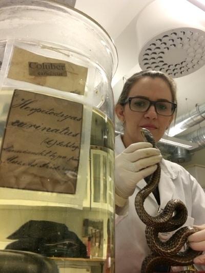 Thais Guedes analisando serpentes do Carl von Linnaeus no Museu de História Natural da Suécia.