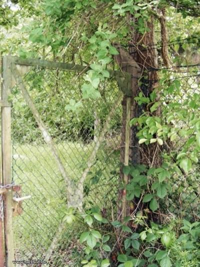 Bild 10: Tor an der ehemaligen Pumpstation, Gebäude 57, 2014, Foto Bendler.