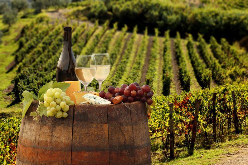 Découvrez les meilleurs vignobles du Latium