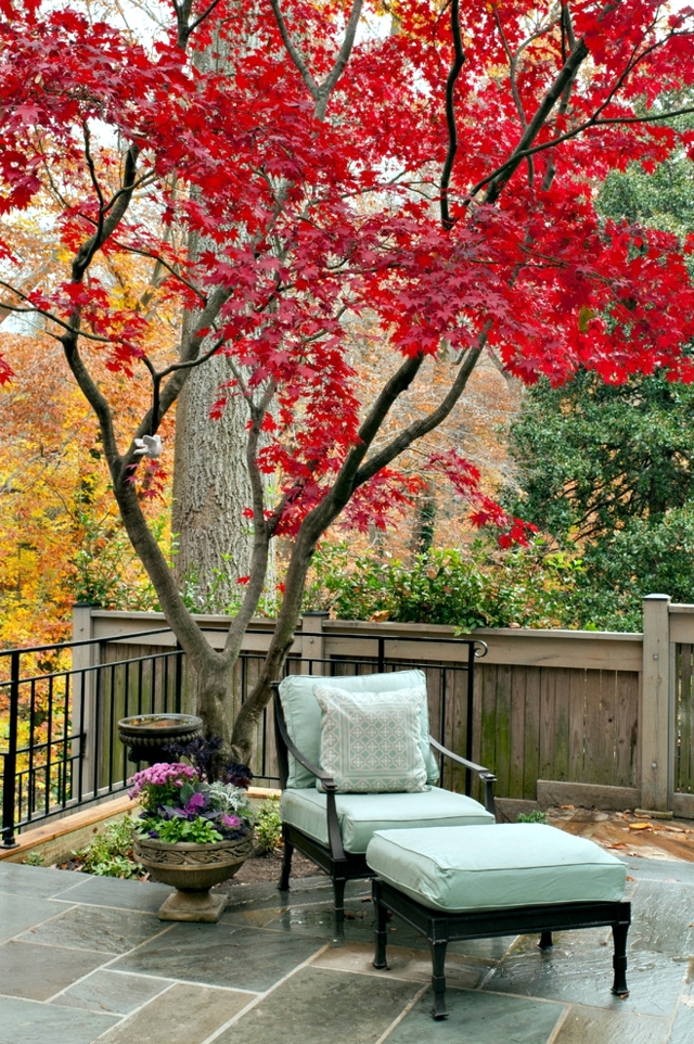 Garden design ideas - the best trees for small gardens ... on Backyard Landscaping Ideas With Trees id=39897