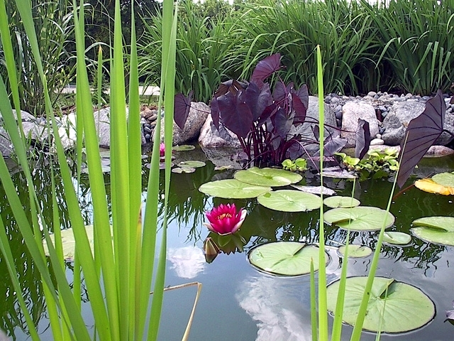 Small Pond Features
