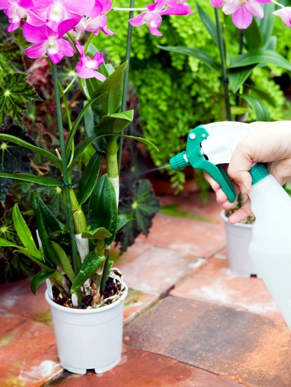 Tips For Beautiful Indoor Plants Orchid Care Interior