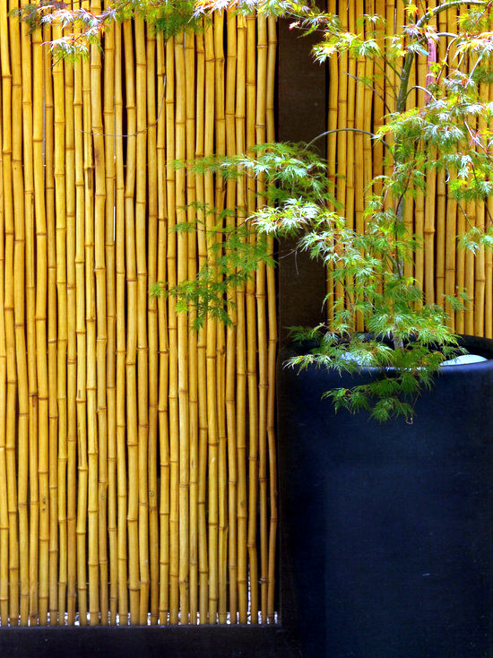 56 Ideas For Bamboo In The Garden Out Of Sight Or