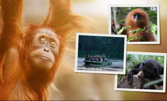 Omaze-Borneo-Sweepstakes