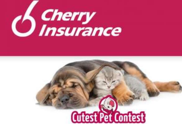 Cherryinsurance-Cutest-Pet-Contest