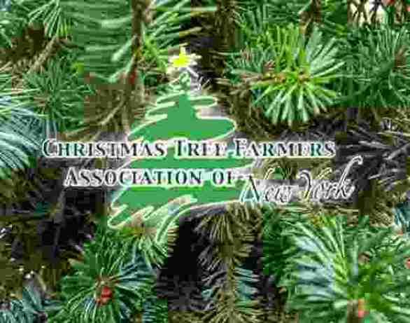 WBEE-Christmas-Contest
