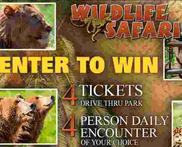 KEZI-Wildlife-Safari-Contest