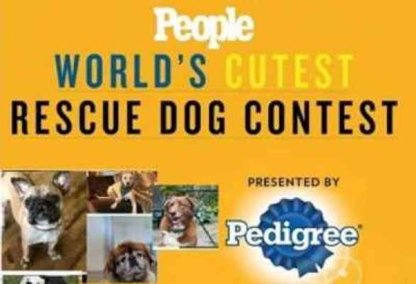 people-worlds-cutest-rescue-dog-contest