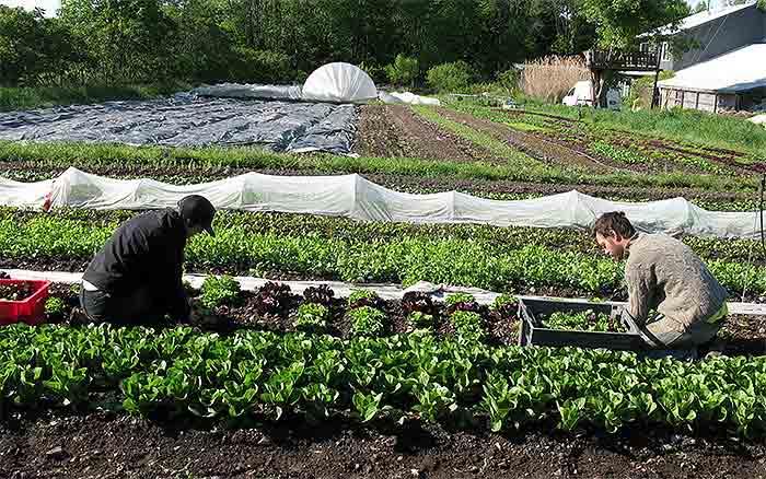 Market-Gardener3