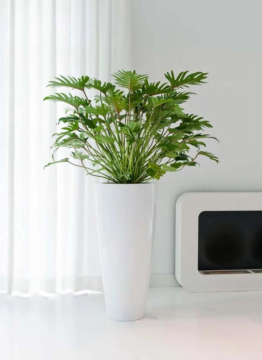Studio interior, interior design, piante all'interno, vasi all'aperto,. Vasi E Contenitori Per Piante Da Interno Ed Esterno Vasi Design Officina Verde Design