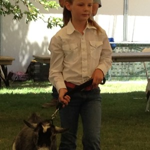 "Hattie in the ""zone"" while showing her goat at the fair in 2014."