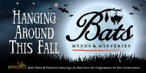Bats Myths and Mysteries