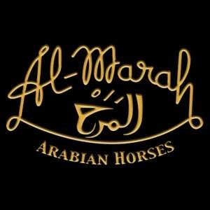 We will be spending our afternoon at @almaraharabians today for their horse interactive experience! What would you like to see?!? #orlandofunandfood