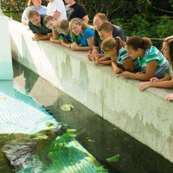 Manatee Rehabilitation Center