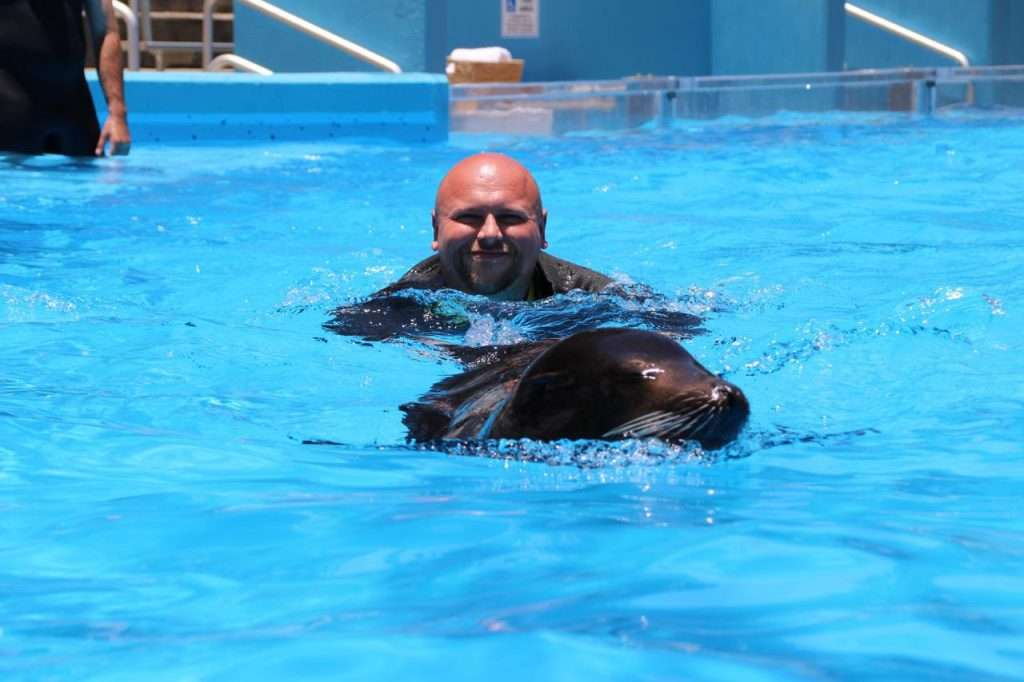 Swim With Sea Lions