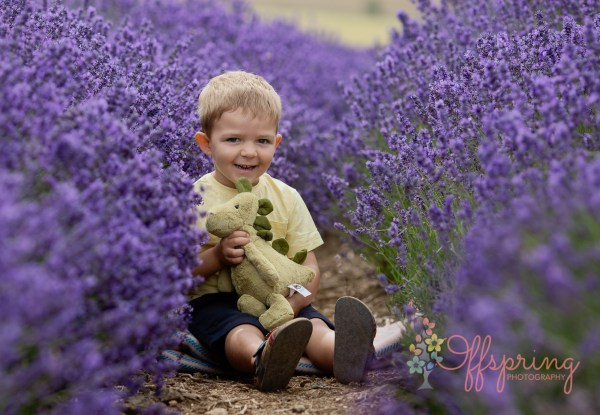 Child in Cotswold Lavender