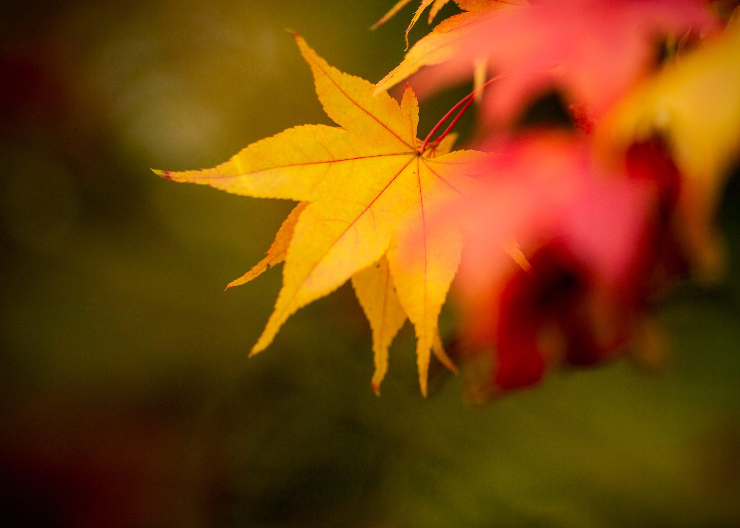 Autumn Photoshoots in maple trees