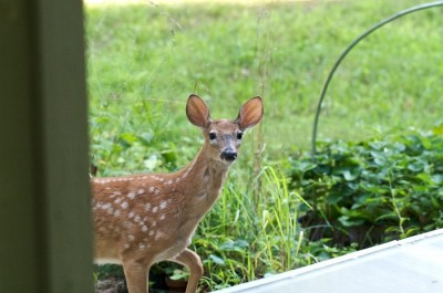 Get rid of garden animals without a fence