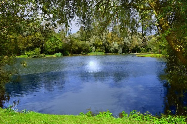 Here's What You BETTER Know Before You Build Your First Pond