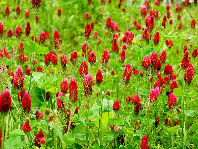 8 Fast-Growing Cover Crops That Will Transform Your Garden