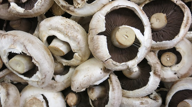 Mushrooms: The Perfect, Indoor, Fast-Growing Winter Crop