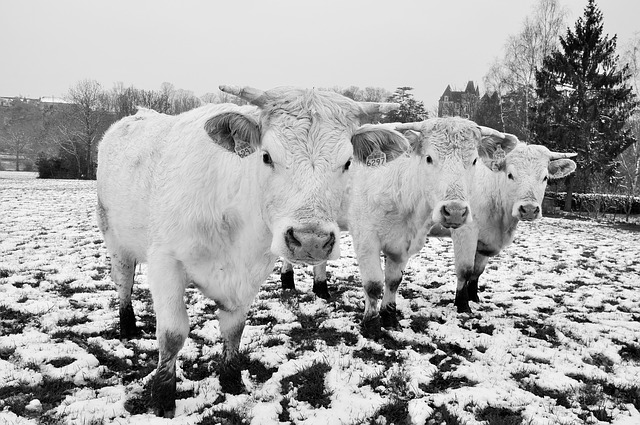 Free-And-Clever Ways To Keep Livestock Water From Freezing
