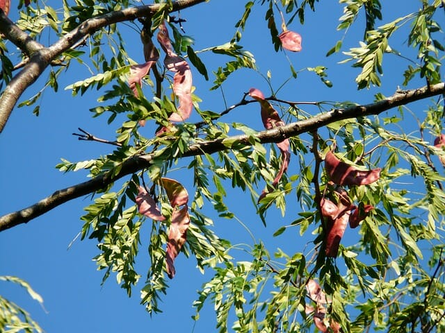 5 'Survival Insurance' Trees Every Homesteader Should Plant