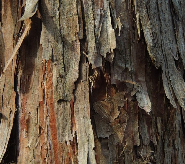 7 crazy ways to use tree bark for survival the survival for Tree trunk uses