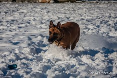 og-krumbach-trainingsbetrieb-2018-02-24-787
