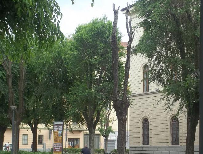 i due alberi morti: il primo sulla destra si confonde un po, mentre il secondo è perfettamente visibile