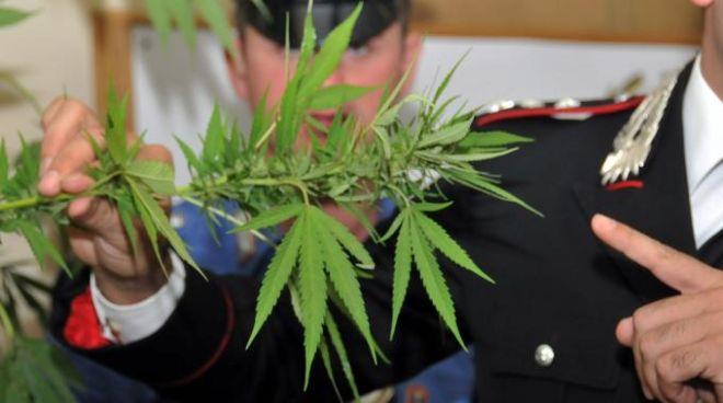 marijuana - L