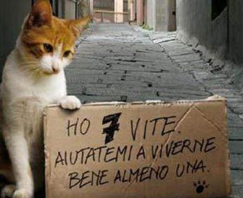 gatto - Q