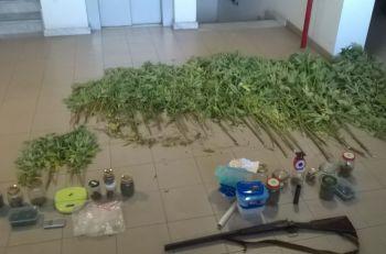 I Carabinieri di Acqui Terme arrestano un coltivatore di canapa indiana