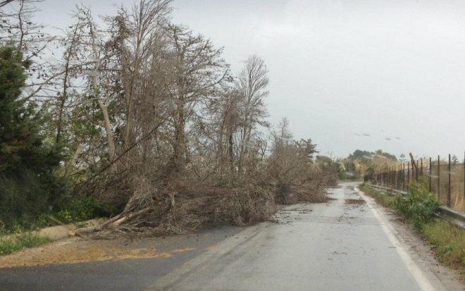 Il Comune di Tortona ha disposto la raccolta di rami e alberi divelti dal maltempo di ottobre