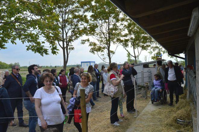 Al circo di elilu di Castelnuovo Scrivia c'è mangiarmaggio rassegna di razze, alimenti e usanze…